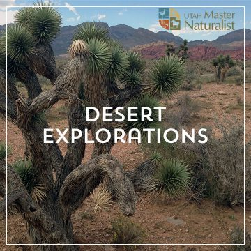 Desert Explorations