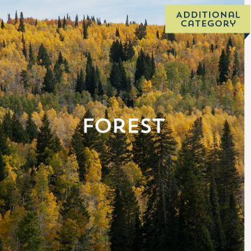 Forest - Additional Catergory