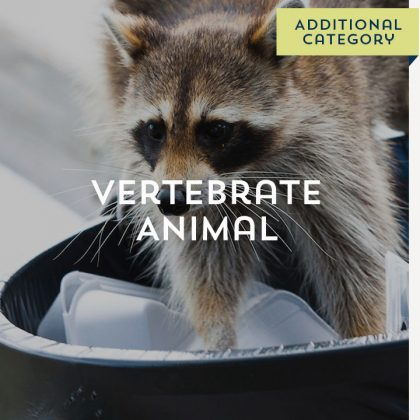 Vertebrate Animal - Additional Category