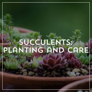 Succulents: Planting and Care