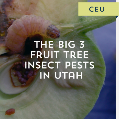 The Big 3 Fruit Tree Insect Pests in Utah
