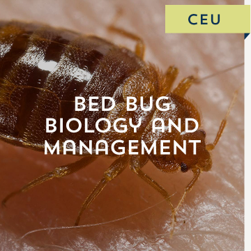 Bed Bug Biology and Management