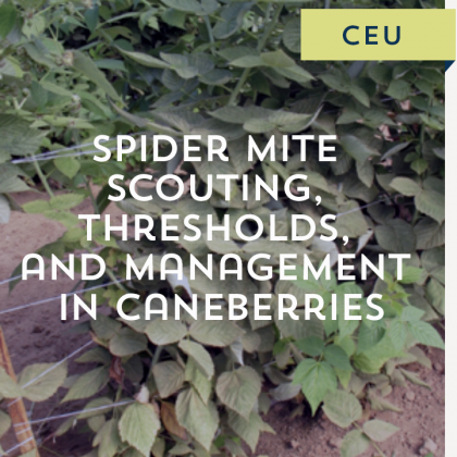 Spider Mite Scouting, Thresholds, and Management in Caneberries